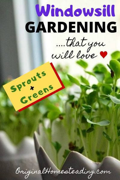Greens to Grow Indoors During the Winter on a Sunny Windowsill promo image