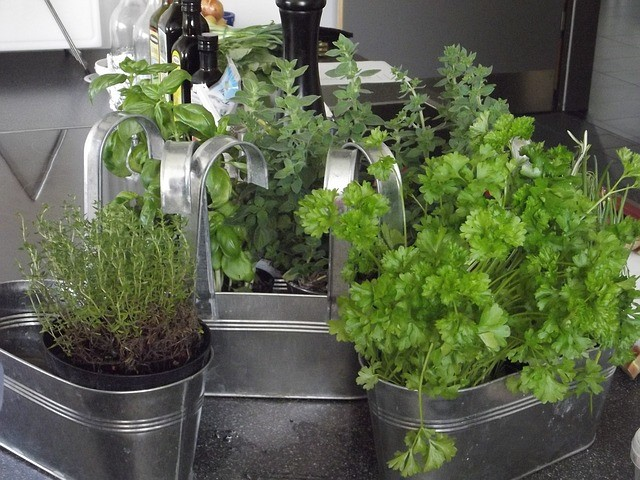 herbs growing in small pots