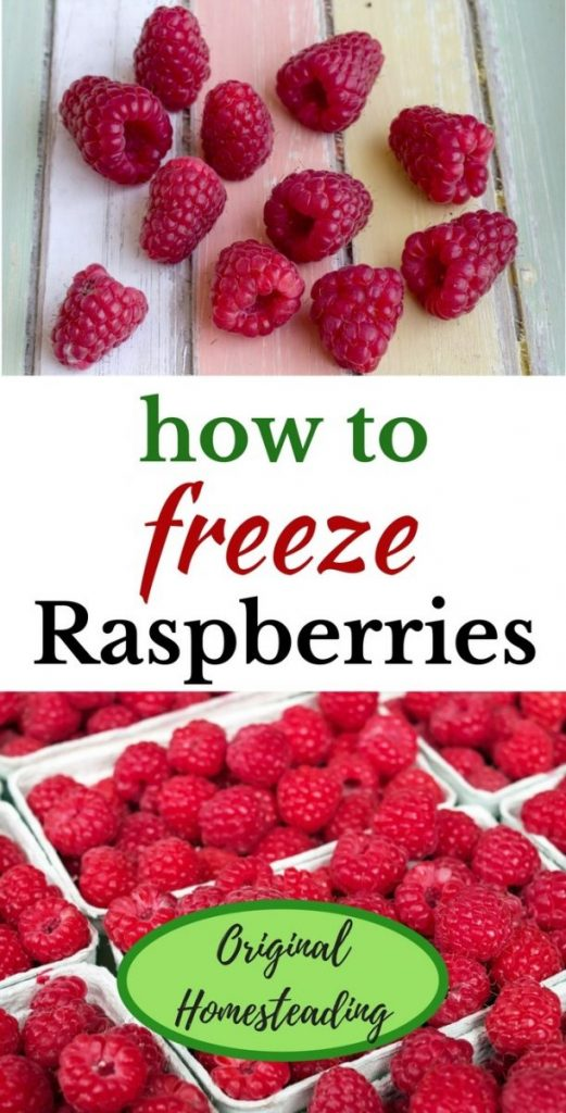 How to Freeze Summer Berries such as Raspberries, come winter you will be glad you did!