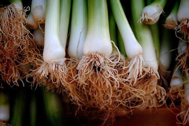 fresh green onions in a bunch